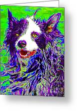 Sheep Dog 20130125v4 Greeting Card by Wingsdomain Art and Photography