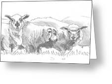 Sheep Drawing Greeting Card