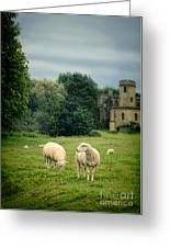 Sheep Grazing By Castle Greeting Card