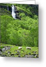 Sheep In A Grassy Mountain Field Greeting Card