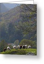 Sheep In A Line Greeting Card