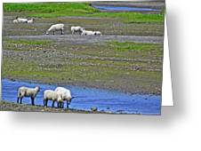 Sheep In Branch-nl Greeting Card