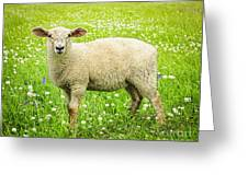 Sheep In Summer Meadow Greeting Card