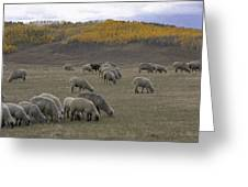 Sheep In The Field Greeting Card