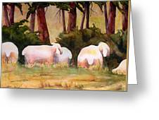 Sheep In The Meadow Greeting Card