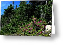Sheep Laurel Shrub Greeting Card