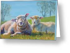 Sheep Lying Down Greeting Card
