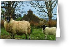 Sheep Of Donegal Ireland Greeting Card
