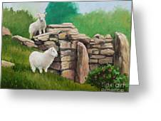 Sheep On A Rock Wall Greeting Card