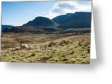Sheep On Grassland Highlands Scotland Uk Greeting Card