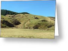 Sheep On Hill Greeting Card