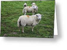Sheep On Parade Greeting Card