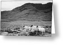 sheep on rough ground Doulough Greeting Card
