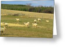 Sheep Out And About Greeting Card