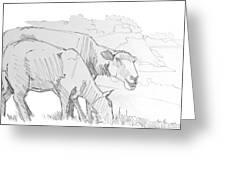 Sheep Pencil Drawing  Greeting Card