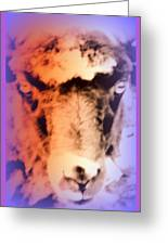 The Sheep Feel The Shame But It Isn't Her Fault  Greeting Card