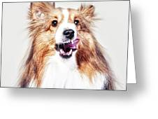 Sheep The Sheltie Greeting Card