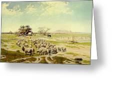 Sheepherding Montana Greeting Card