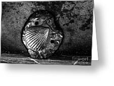 Shell 1 Greeting Card