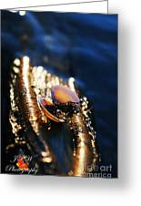 Shell By The River Greeting Card