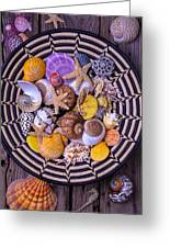 Shell Collecting Greeting Card