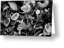 Shell Collection 3 Greeting Card