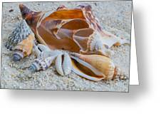 Shell Collectors Dream Greeting Card