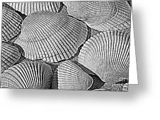 Shell Effects 10 Greeting Card