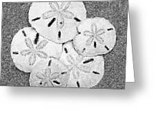 Shell Effects 4 Greeting Card