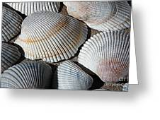 Shell Effects 5 Greeting Card