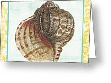 Shell Finds-c Greeting Card by Jean Plout
