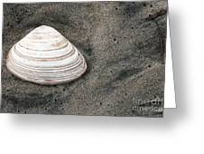 Shell In The Sand Greeting Card by John Rizzuto