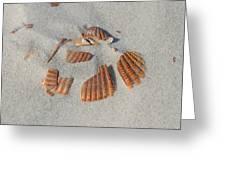 Shell Jigsaw Greeting Card