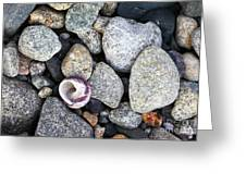 Shell On The Shore 1 Greeting Card