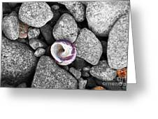 Shell On The Shore 2 Greeting Card