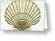 Shell Treasure-a Greeting Card