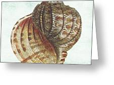 Shell Treasure-c Greeting Card