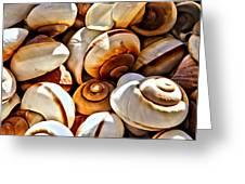 Shells Galore Greeting Card