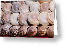 Shells In A Row Greeting Card