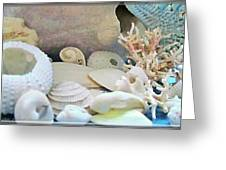 Shells In Pastels Greeting Card
