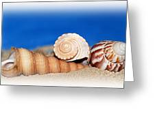 Shells In Sand Greeting Card