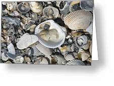 Shells In Shells 1 Greeting Card
