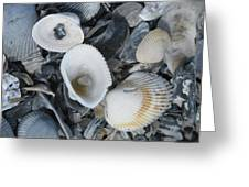 Shells In Shells 2 Greeting Card