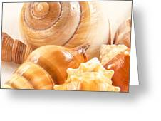 Shells Greeting Card by Jean Noren