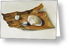 Shells On Paper Greeting Card by Horst Braun