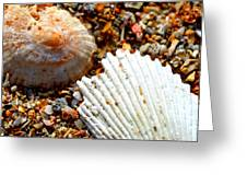 Shells On Sand Greeting Card