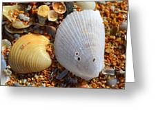 Shells On Sand2 Greeting Card by Riad Belhimer