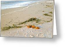 Shells On The Beach Greeting Card