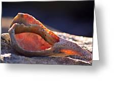Shellwork Greeting Card