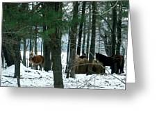 Sheltered In The Trees Greeting Card